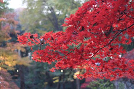 花ギフト|フラワーギフト|誕生日 花|カノシェ話題|スタンド花|ウエディングブーケ|花束|花屋|真っ赤