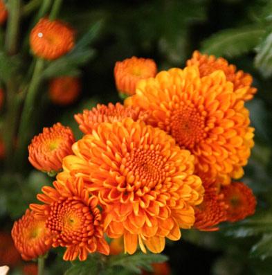花ギフト フラワーギフト 誕生日 花 カノシェ話題 スタンド花 ウエディングブーケ 花束 花屋 IMG_0180