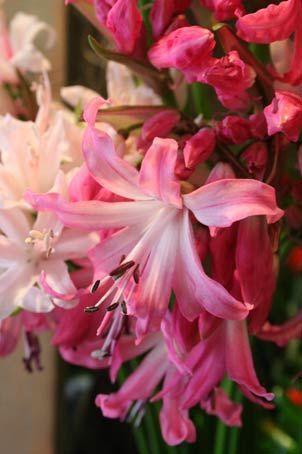 花ギフト|フラワーギフト|誕生日 花|カノシェ話題|スタンド花|ウエディングブーケ|花束|花屋|237bc2d8