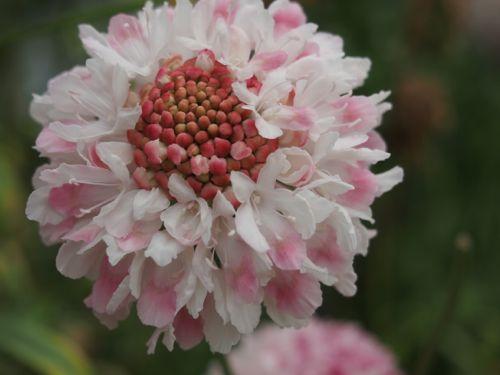 花ギフト|フラワーギフト|誕生日 花|カノシェ話題|スタンド花|ウエディングブーケ|花束|花屋|P1010068