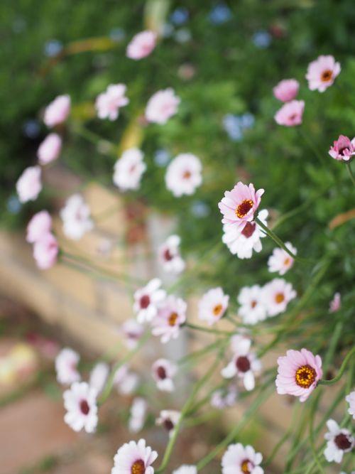 花ギフト|フラワーギフト|誕生日 花|カノシェ話題|スタンド花|ウエディングブーケ|花束|花屋|P1010748
