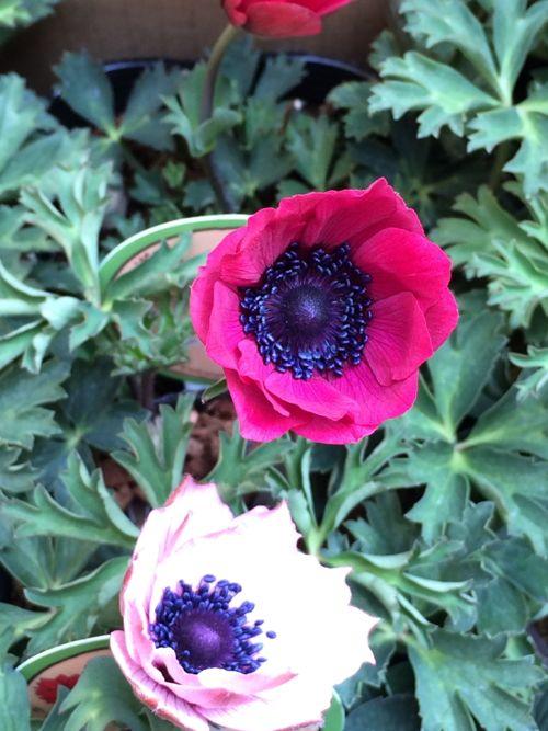 花ギフト|フラワーギフト|誕生日 花|カノシェ話題|スタンド花|ウエディングブーケ|花束|花屋|IMG_9829