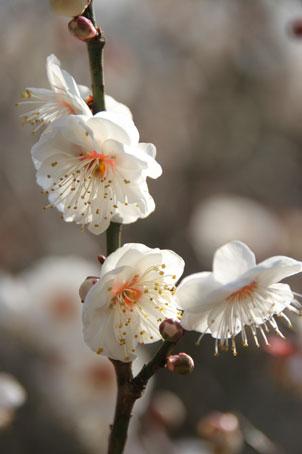 花ギフト|フラワーギフト|誕生日 花|カノシェ話題|スタンド花|ウエディングブーケ|花束|花屋|ume