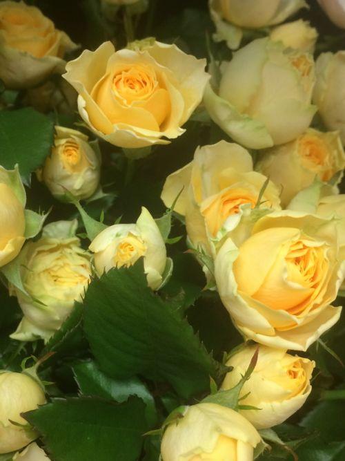 花ギフト|フラワーギフト|誕生日 花|カノシェ話題|スタンド花|ウエディングブーケ|花束|花屋|IMG_8102