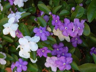 花ギフト|フラワーギフト|誕生日 花|カノシェ話題|スタンド花|ウエディングブーケ|花束|花屋|nioibanmaturi03