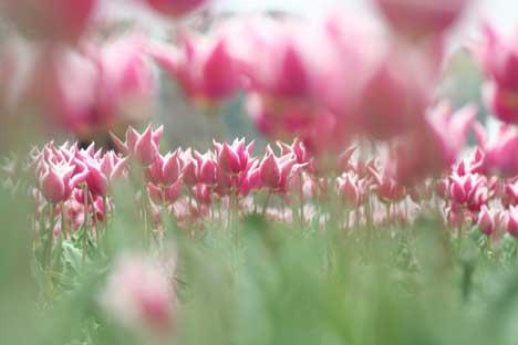 花ギフト|フラワーギフト|誕生日 花|カノシェ話題|スタンド花|ウエディングブーケ|花束|花屋|リップピンク