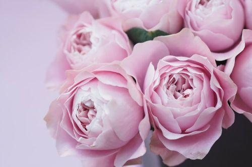 花ギフト|フラワーギフト|誕生日 花|カノシェ話題|スタンド花|ウエディングブーケ|花束|花屋|IMG_8667