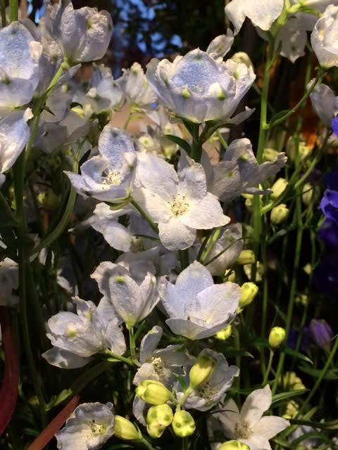 花ギフト|フラワーギフト|誕生日 花|カノシェ話題|スタンド花|ウエディングブーケ|花束|花屋|-10