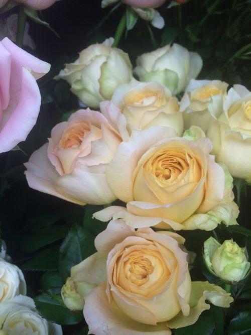 花ギフト|フラワーギフト|誕生日 花|カノシェ話題|スタンド花|ウエディングブーケ|花束|花屋|IMG_8100