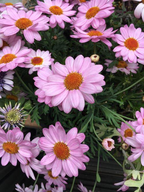 花ギフト|フラワーギフト|誕生日 花|カノシェ話題|スタンド花|ウエディングブーケ|花束|花屋|IMG_0110