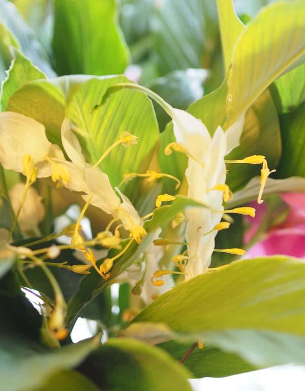 花ギフト|フラワーギフト|誕生日 花|カノシェ話題|スタンド花|ウエディングブーケ|花束|花屋|P9250449