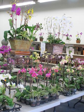 花ギフト|フラワーギフト|誕生日 花|カノシェ話題|スタンド花|ウエディングブーケ|花束|花屋|ran