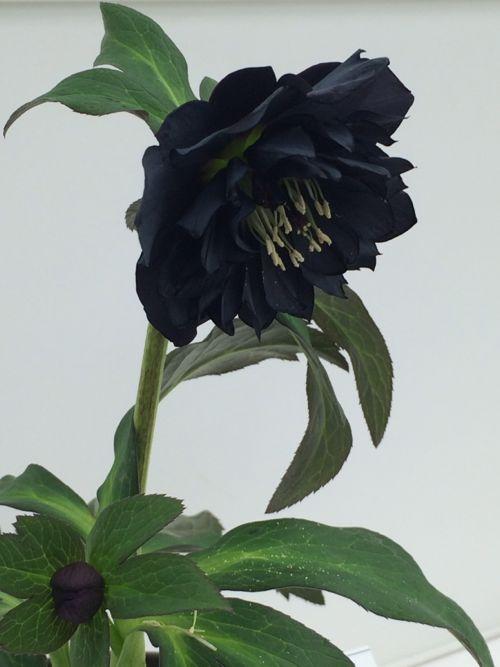 花ギフト|フラワーギフト|誕生日 花|カノシェ話題|スタンド花|ウエディングブーケ|花束|花屋|IMG_9510
