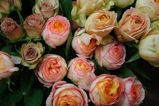 花ギフト|フラワーギフト|誕生日 花|カノシェ話題|スタンド花|ウエディングブーケ|花束|花屋|ipu-bebi-kyara