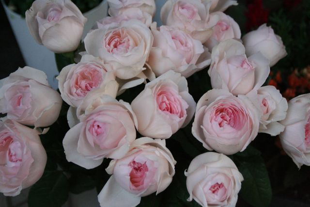 花ギフト|フラワーギフト|誕生日 花|カノシェ話題|スタンド花|ウエディングブーケ|花束|花屋|IMG_0212