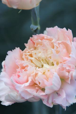 花ギフト|フラワーギフト|誕生日 花|カノシェ話題|スタンド花|ウエディングブーケ|花束|花屋|カーネ人気