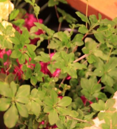 花ギフト|フラワーギフト|誕生日 花|カノシェ話題|スタンド花|ウエディングブーケ|花束|花屋|IMG_4327