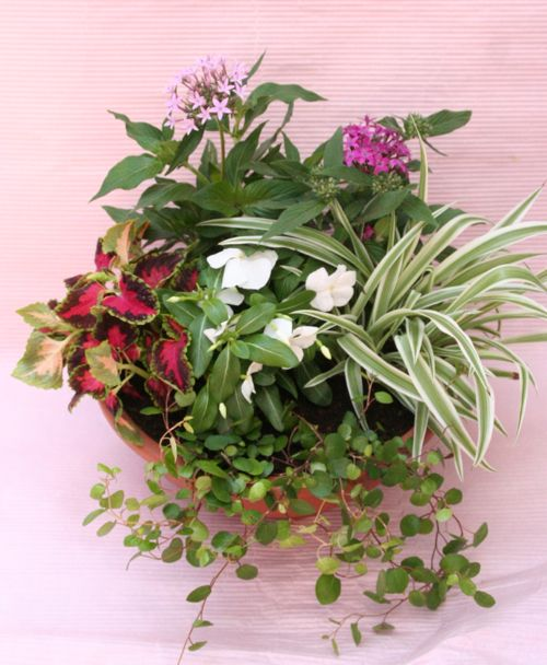 花ギフト|フラワーギフト|誕生日 花|カノシェ話題|スタンド花|ウエディングブーケ|花束|花屋|IMG_0281