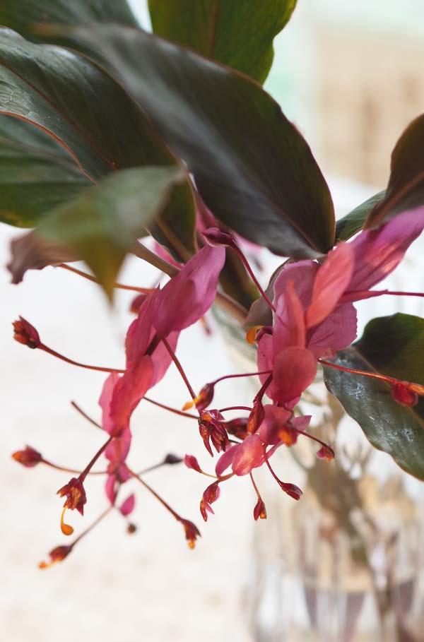 花ギフト|フラワーギフト|誕生日 花|カノシェ話題|スタンド花|ウエディングブーケ|花束|花屋|P9250485