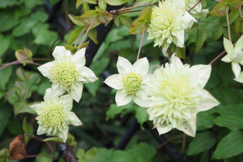 花ギフト|フラワーギフト|誕生日 花|カノシェ話題|スタンド花|ウエディングブーケ|花束|花屋|P6022763