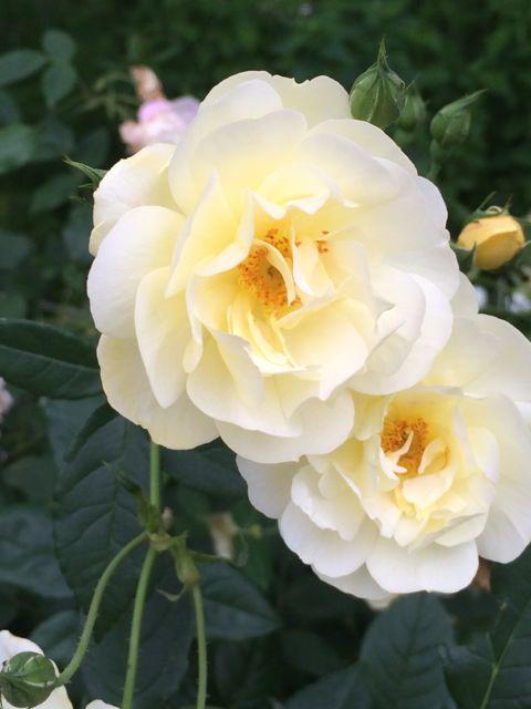 花ギフト|フラワーギフト|誕生日 花|カノシェ話題|スタンド花|ウエディングブーケ|花束|花屋|IMG_1475