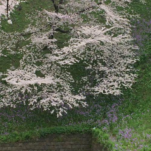花ギフト|フラワーギフト|誕生日 花|カノシェ話題|スタンド花|ウエディングブーケ|花束|花屋|IMG_7690