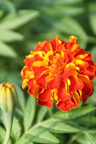 花ギフト|フラワーギフト|誕生日 花|カノシェ話題|スタンド花|ウエディングブーケ|花束|花屋|ゼニス