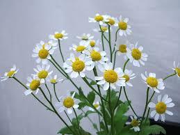 花ギフト|フラワーギフト|誕生日 花|カノシェ話題|スタンド花|ウエディングブーケ|花束|花屋|シングル