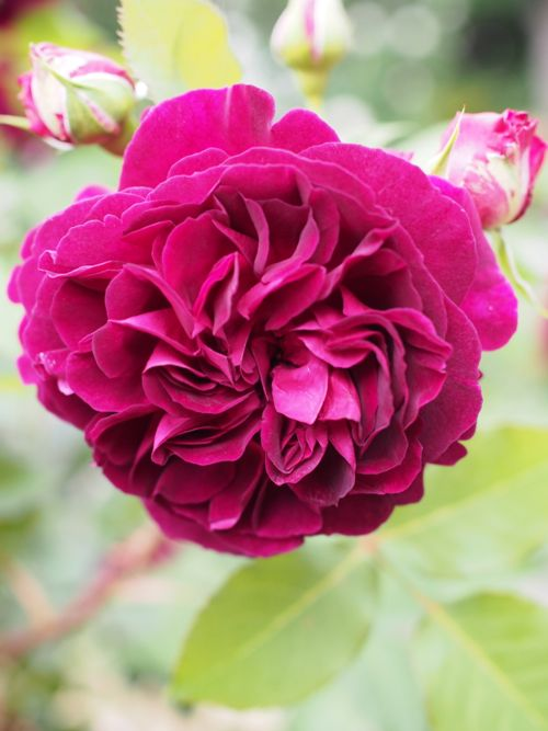 花ギフト|フラワーギフト|誕生日 花|カノシェ話題|スタンド花|ウエディングブーケ|花束|花屋|P1010818