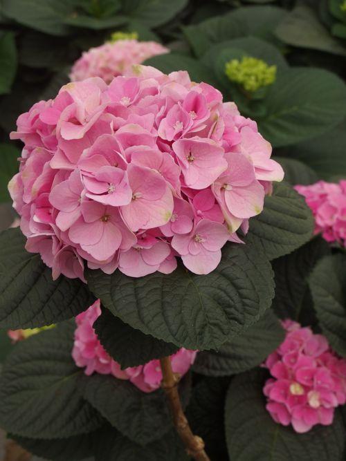 花ギフト|フラワーギフト|誕生日 花|カノシェ話題|スタンド花|ウエディングブーケ|花束|花屋|P6080080
