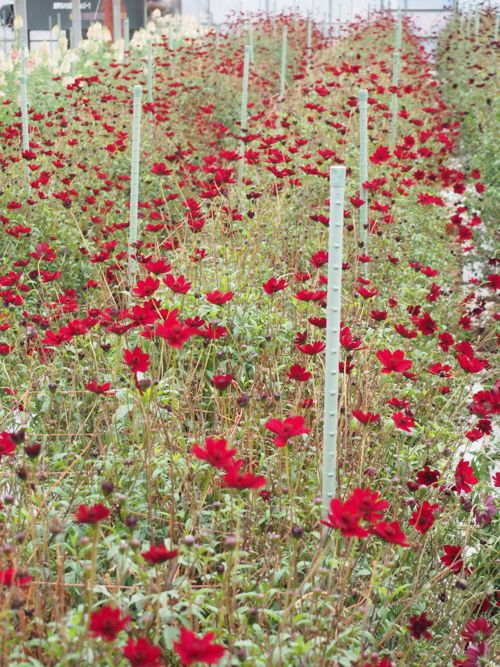 花ギフト|フラワーギフト|誕生日 花|カノシェ話題|スタンド花|ウエディングブーケ|花束|花屋|P1010111