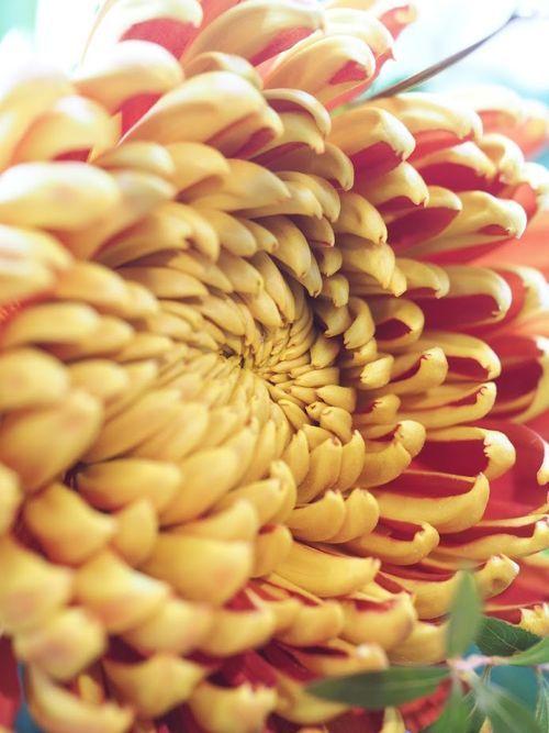 花ギフト|フラワーギフト|誕生日 花|カノシェ話題|スタンド花|ウエディングブーケ|花束|花屋|P8290447