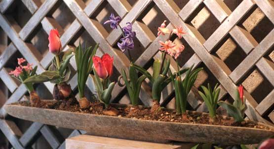 花ギフト フラワーギフト 誕生日 花 カノシェ話題 スタンド花 ウエディングブーケ 花束 花屋 おやゆび