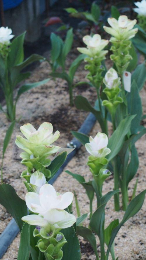 花ギフト|フラワーギフト|誕生日 花|カノシェ話題|スタンド花|ウエディングブーケ|花束|花屋|P1011251