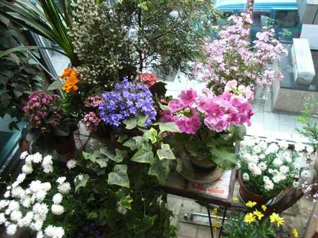 花ギフト|フラワーギフト|誕生日 花|カノシェ話題|スタンド花|ウエディングブーケ|花束|花屋|中庭2