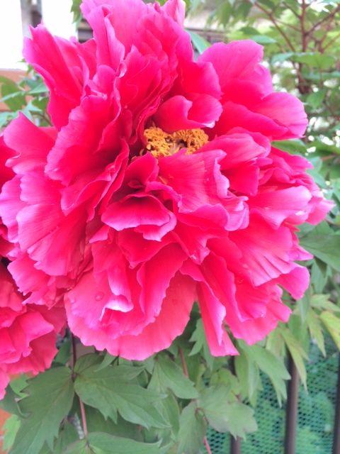 花ギフト|フラワーギフト|誕生日 花|カノシェ話題|スタンド花|ウエディングブーケ|花束|花屋|写真 2(31)