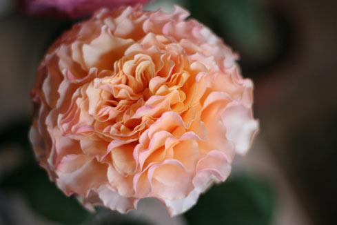 花ギフト|フラワーギフト|誕生日 花|カノシェ話題|スタンド花|ウエディングブーケ|花束|花屋|カンパネラ