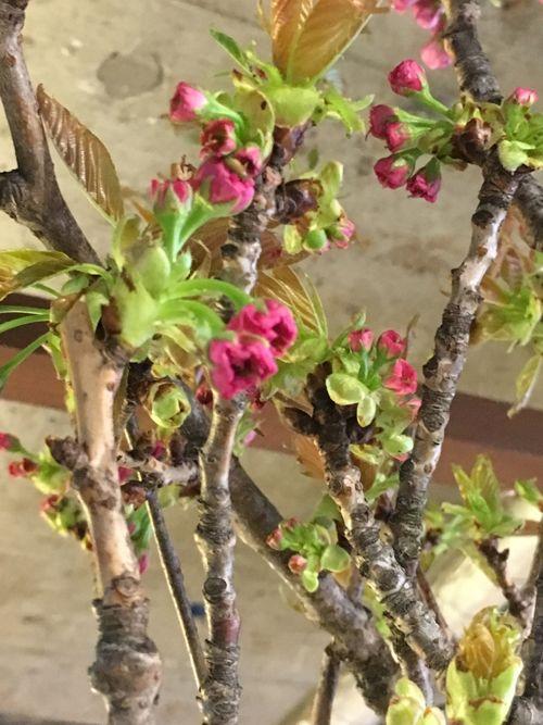 花ギフト|フラワーギフト|誕生日 花|カノシェ話題|スタンド花|ウエディングブーケ|花束|花屋|IMG_0483