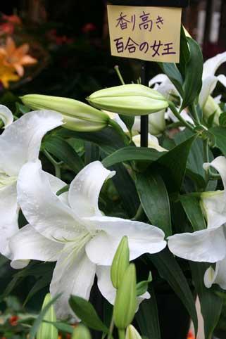 花ギフト|フラワーギフト|誕生日 花|カノシェ話題|スタンド花|ウエディングブーケ|花束|花屋|かさ