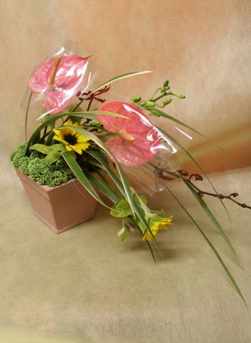 花ギフト|フラワーギフト|誕生日 花|カノシェ話題|スタンド花|ウエディングブーケ|花束|花屋|ゆみこさん アンス