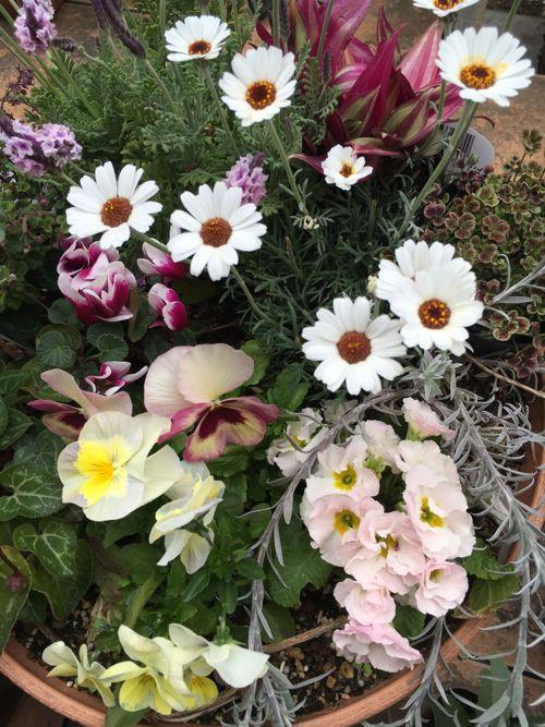 花ギフト|フラワーギフト|誕生日 花|カノシェ話題|スタンド花|ウエディングブーケ|花束|花屋|IMG_0101