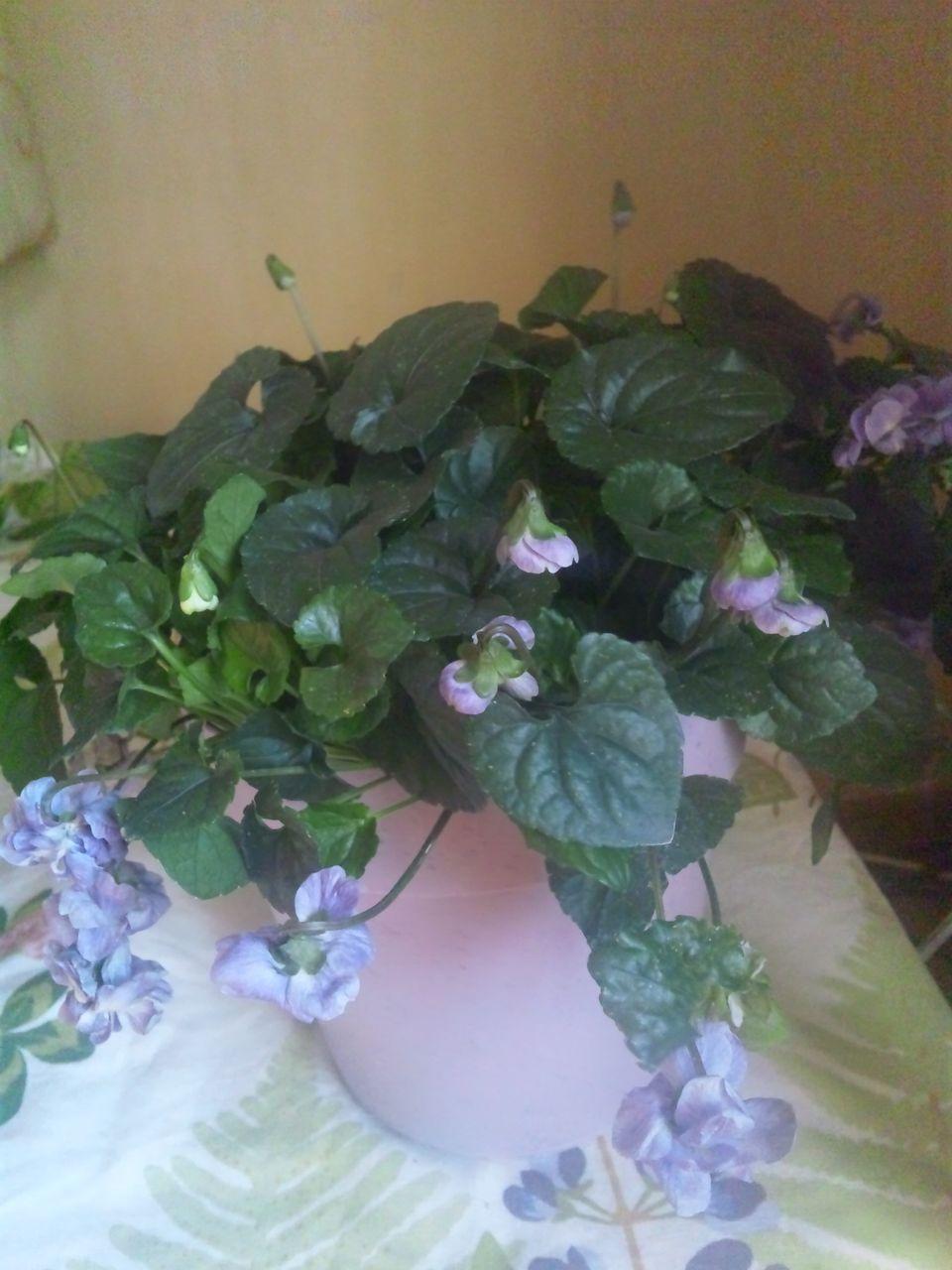 花ギフト|フラワーギフト|誕生日 花|カノシェ話題|スタンド花|ウエディングブーケ|花束|花屋|120211_092212
