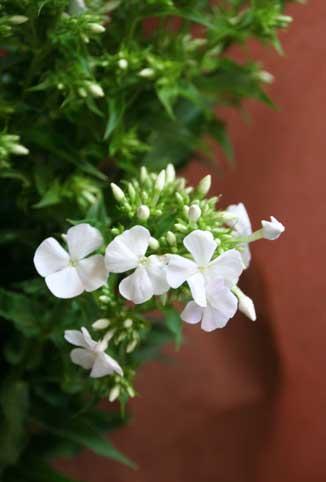 花ギフト|フラワーギフト|誕生日 花|カノシェ話題|スタンド花|ウエディングブーケ|花束|花屋|フロックス