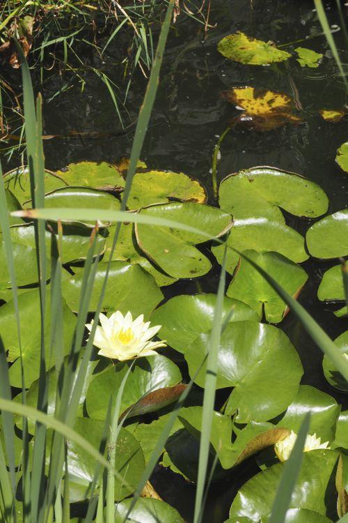 花ギフト|フラワーギフト|誕生日 花|カノシェ話題|スタンド花|ウエディングブーケ|花束|花屋|P8130106