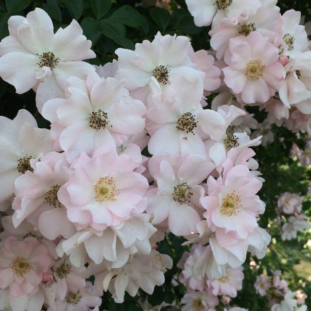 花ギフト|フラワーギフト|誕生日 花|カノシェ話題|スタンド花|ウエディングブーケ|花束|花屋|IMG_1494