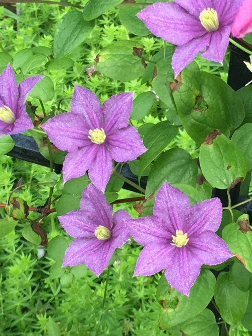 花ギフト|フラワーギフト|誕生日 花|カノシェ話題|スタンド花|ウエディングブーケ|花束|花屋|IMG_1664
