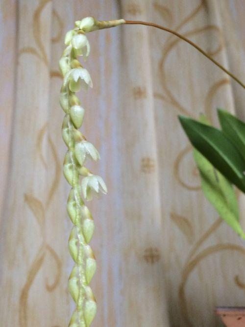 花ギフト|フラワーギフト|誕生日 花|カノシェ話題|スタンド花|ウエディングブーケ|花束|花屋|IMG_9617