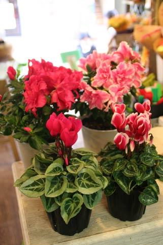 花ギフト|フラワーギフト|誕生日 花|カノシェ話題|スタンド花|ウエディングブーケ|花束|花屋|IMG_9985