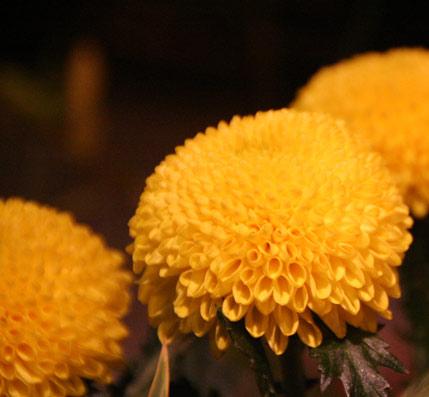 花ギフト フラワーギフト 誕生日 花 カノシェ話題 スタンド花 ウエディングブーケ 花束 花屋 IMG_0179
