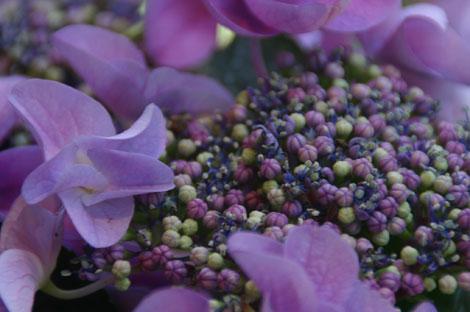 花ギフト|フラワーギフト|誕生日 花|カノシェ話題|スタンド花|ウエディングブーケ|花束|花屋|がくあじさい